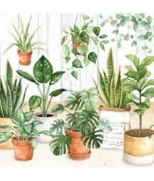 Serwetka rośliny w doniczkach.