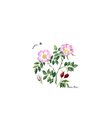 Serwetka do decoupage - Dzika róża 1