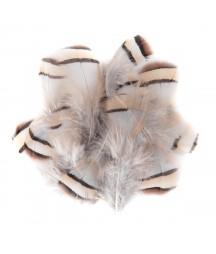 Naturalne piórka bażanta 5-7 cm - artykuły kreatywne
