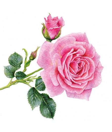 Serwetka do decoupage - Róże 5