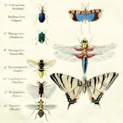 Serwetka - Motyle 5