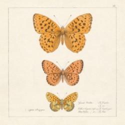Serwetka - Motyle 23