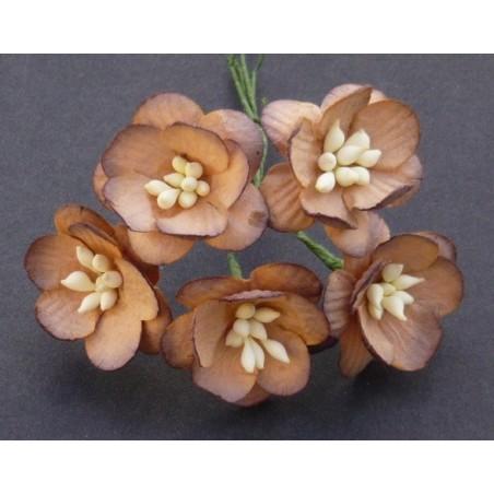 Kwiatki papierowe, 2-Tone Chocolate Brown Mulberry Paper Cherry Blossoms, 10 szt. [SAA-050]